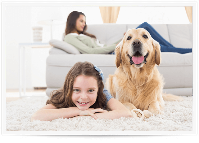 Pet Urine Removal Service in Boston